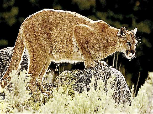 Are cats on the prowl in Edinburg?