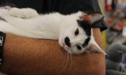 Group aims to find homes for cats