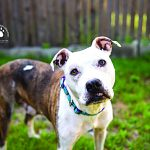 Daisy – Pet of the Week