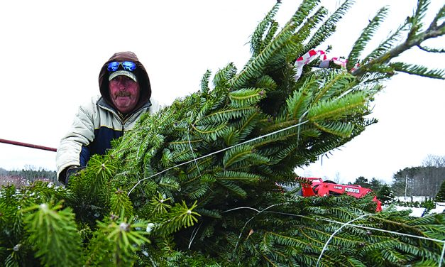 Local tree farmers busy as Christmas approaches